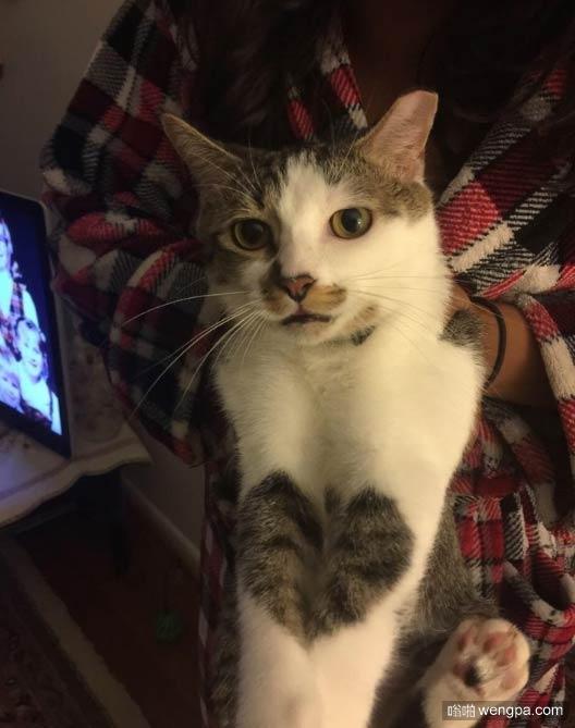 小猫的前腿合在一起有一个心形