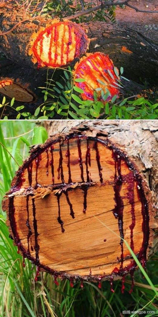 非洲流血之树