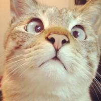 吃惊的猫 惊讶猫,惊讶表情猫,吃惊猫可爱萌宠图片
