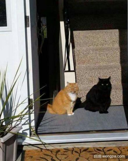 喵星人:这不是我的影子 猫猫搞笑图片 - 嗡啪网