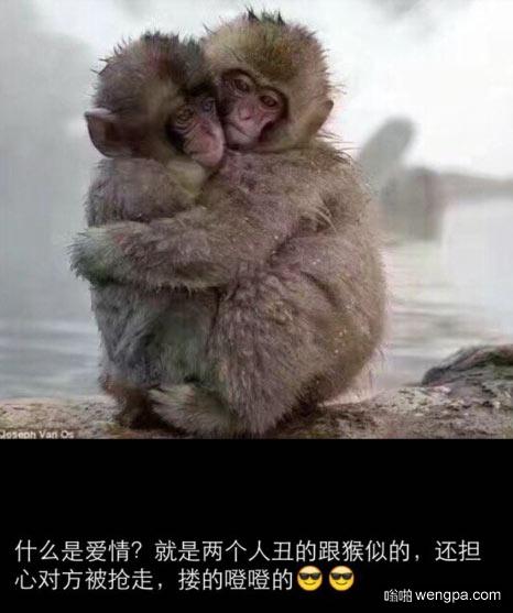 什么是爱情?就是两个人丑的跟猴似得还担心对方被抢走。