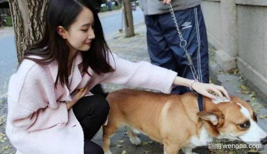 想要撩妹纸,学我养只狗就是了!前提你的狗要可爱哈