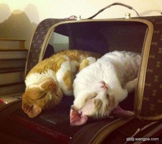 同步的梦 小猫萌宠图片