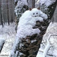 下雪了 熊孩子在树干上堆起了雪人动物
