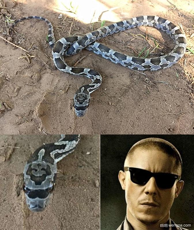 """男子公园发现一极""""不正经""""的蛇 戴墨镜长得跟混帮派似的"""