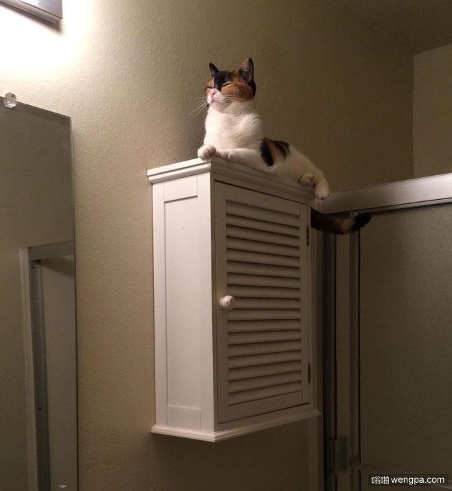 猫猫很享受自己变成柜子上的一尊雕像