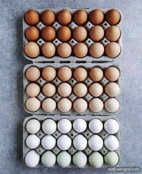 按颜色渐变摆放鸡蛋 看着太舒服了