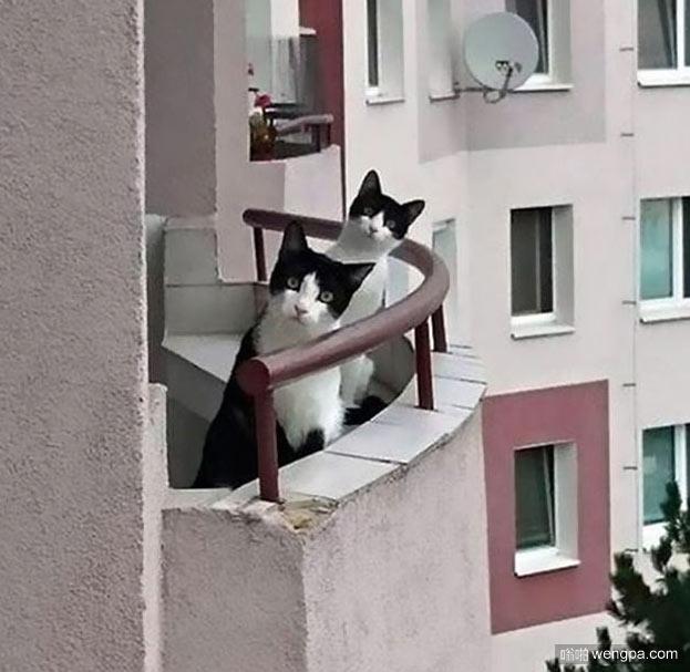 新的邻居 小猫萌宠图片