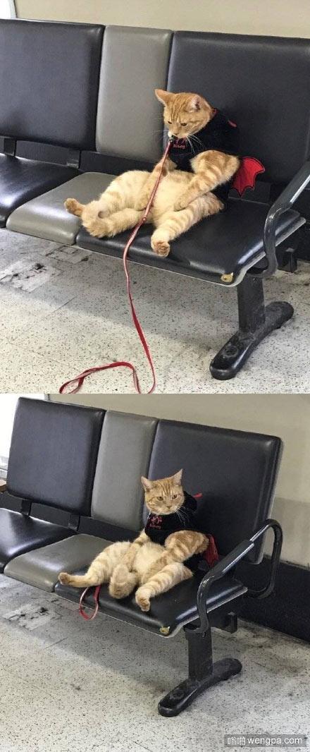 日本一个网友在车站里看到一只坐等铲屎官回来的喵星人,超級萌!铲屎的你再不回来你就要失去本宝宝了
