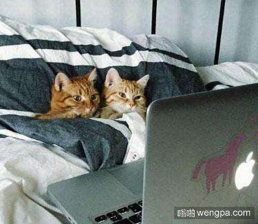 小情侣周末这么度过的 小猫咪萌宠图片