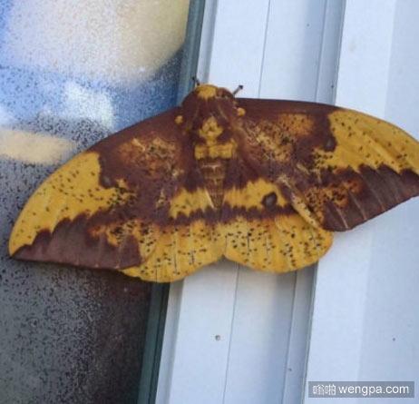 耶稣今天来到我的窗户边 蝴蝶耶稣 - 嗡啪网