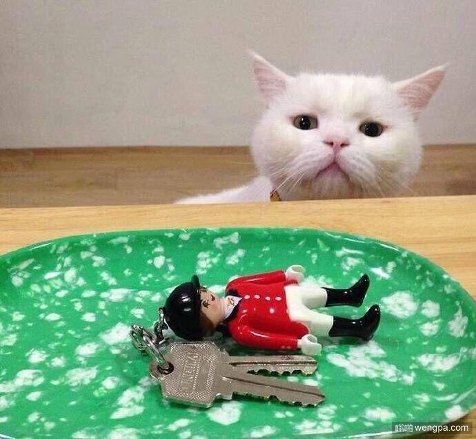 猫咪渴望的眼神 希望盘子里装的是小鱼干