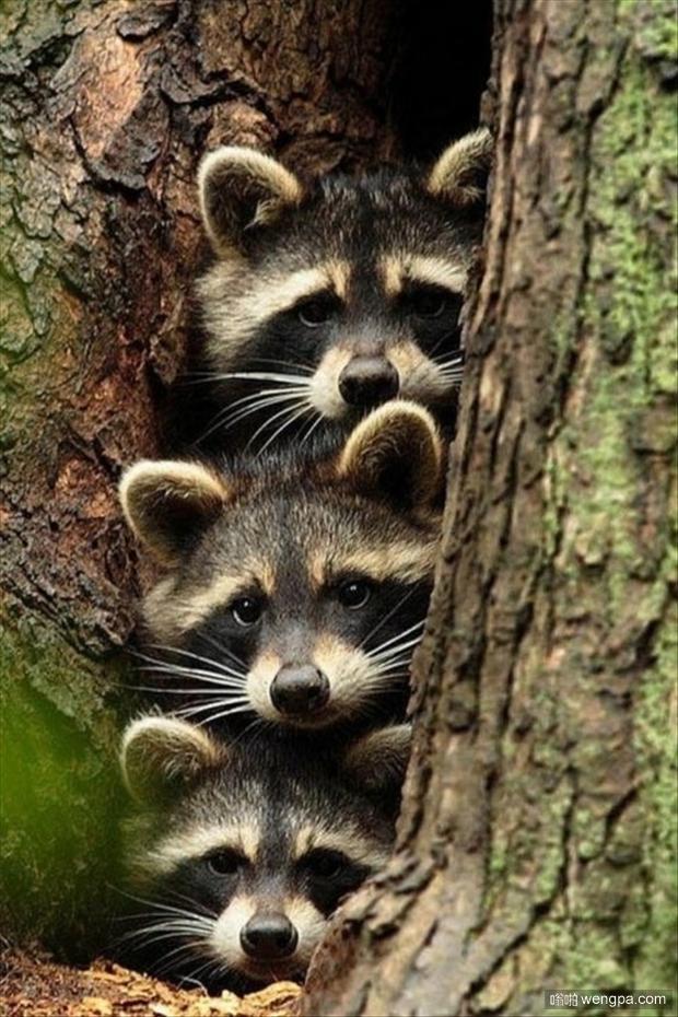一组可爱动物萌宠图片-animals-ever-131