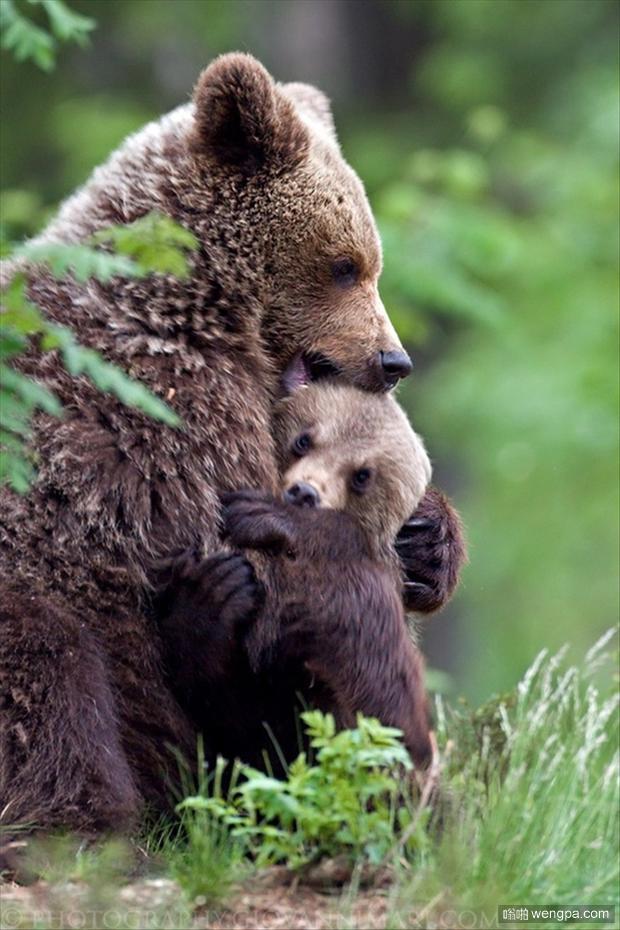 一组可爱动物萌宠图片-animals-ever-33