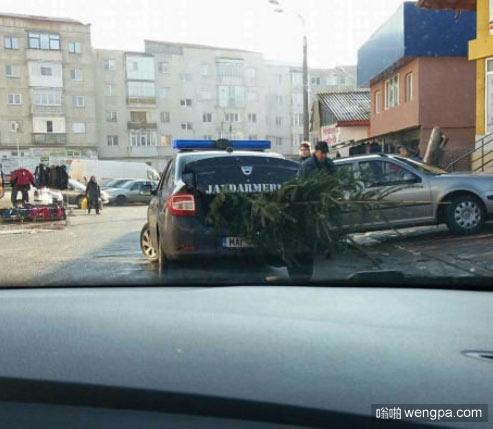 罗马尼亚警方逮捕了一棵圣诞树