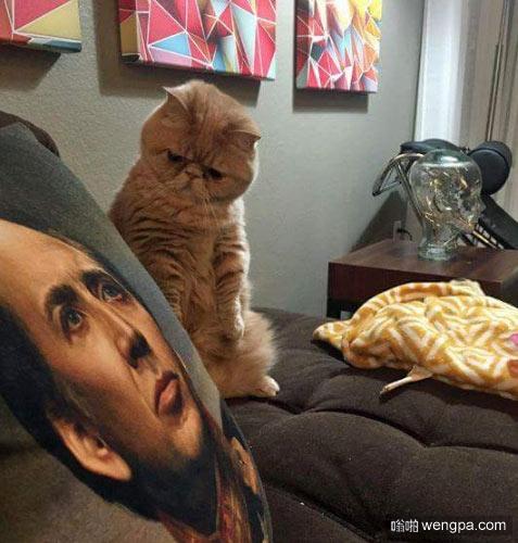 小猫凝视尼古拉斯凯奇抱枕 - 嗡啪网