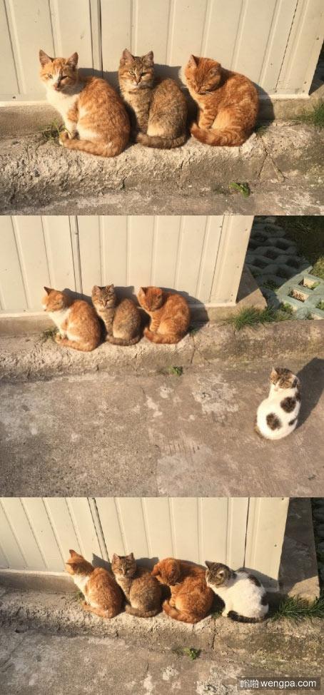 今天下午宿舍门口蹲了三只喵 小猫神同步可爱萌宠图片 - 嗡啪网