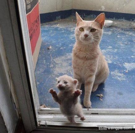 孩子我带来了 要不要负责你自己说吧 小猫搞笑图片 - 嗡啪网