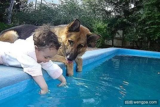 德国牧羊犬看护宝宝不掉进水里