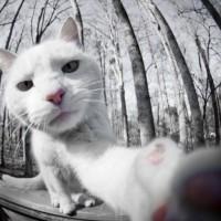 喵星人喜欢自拍 猫咪自拍搞笑萌宠图片