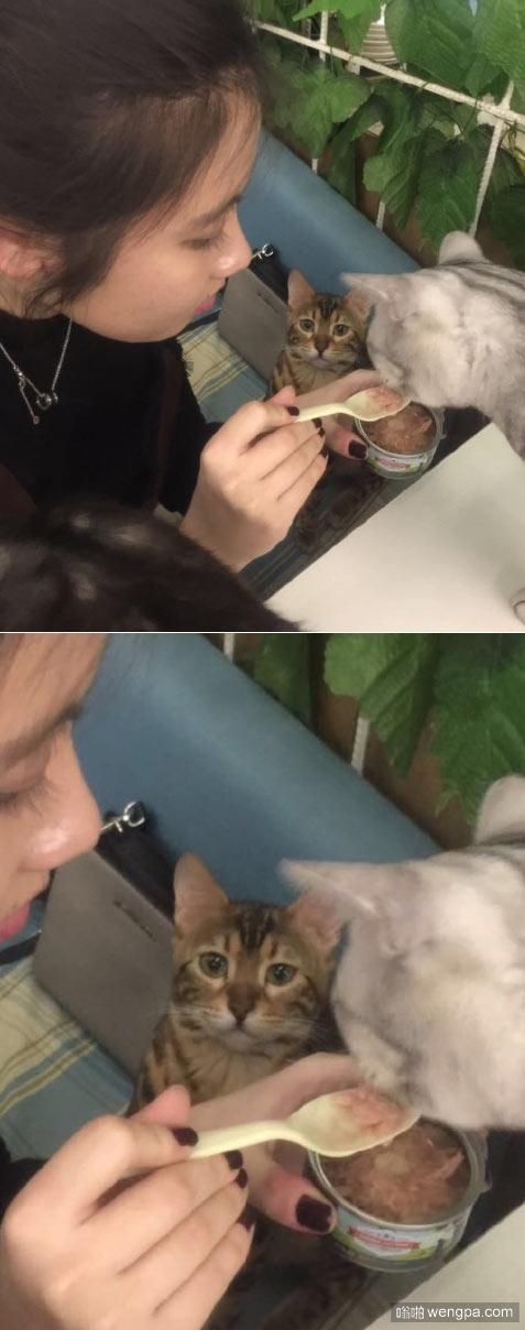 看它可怜的小眼神 萌宠图片:吃货小猫搞笑表情 - 嗡啪网