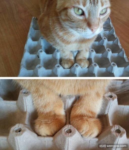 刚刚好 猫咪爪子萌宠图片