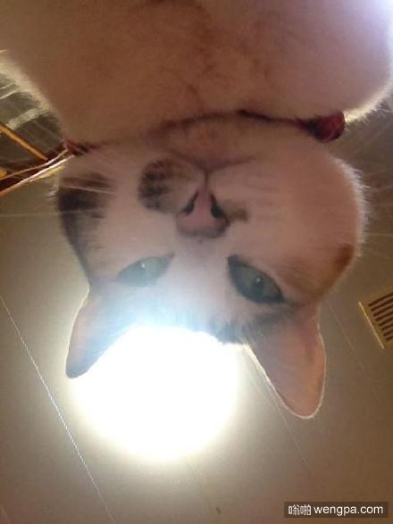铲屎的,你醒了啊?!小猫萌宠图片
