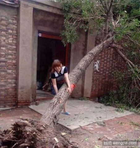 妹子拔树跟拔葱一样