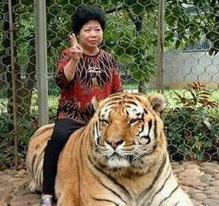 【老虎冷笑话】老虎一来,动物们都四散而逃