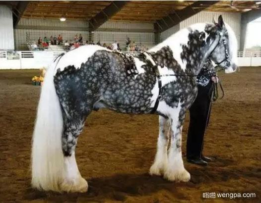漂亮的马身上有一副抽象水墨画