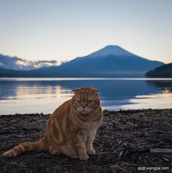 富士山前的喵咪