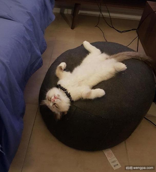 我家的猫 小猫搞笑睡姿萌宠图片 - 嗡啪网