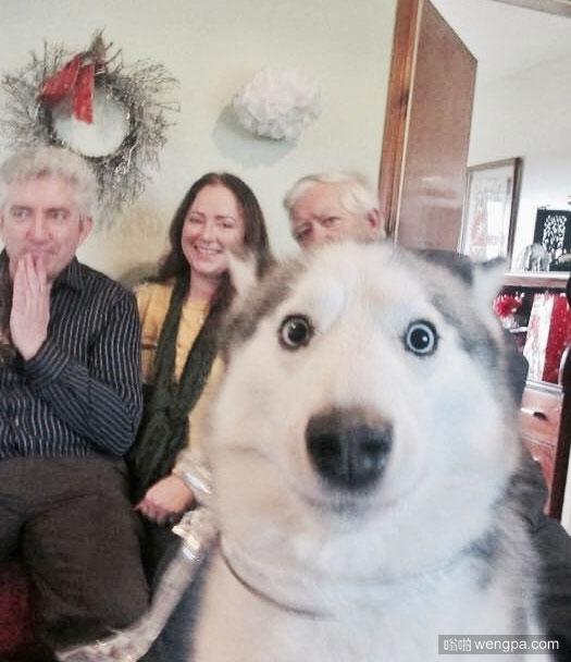 狗狗以为镜头是枪口 二哈搞笑图片
