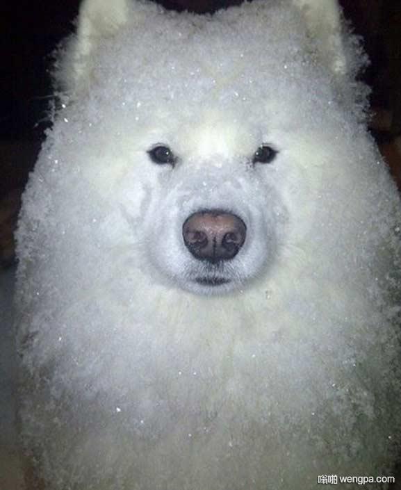 天气预报说晚上要下雪 你出去就会是这个样子