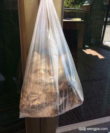 猫咪钻塑料袋 差点当垃圾丢出去了