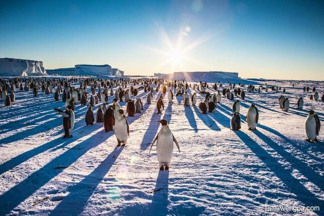 企鹅们在超级大的监狱院子放风