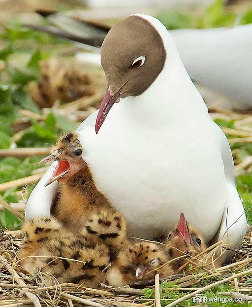 这是亲生的么 雏鸟跟妈妈完全不一样啊