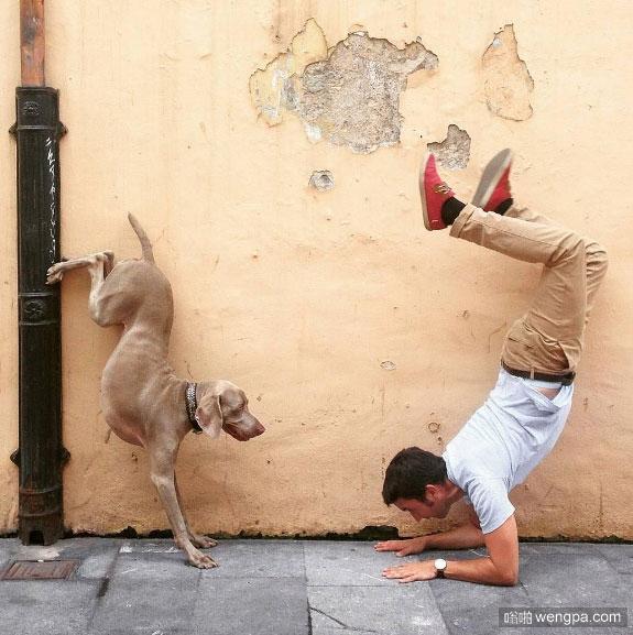 狗狗你你蹬下水道管子上能倒立么 狗狗瑜伽倒立萌宠图片 - 嗡啪网