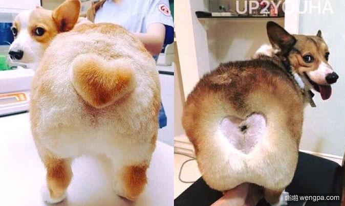 柯基心形尾巴新版 现在是凹进去的心形尾巴