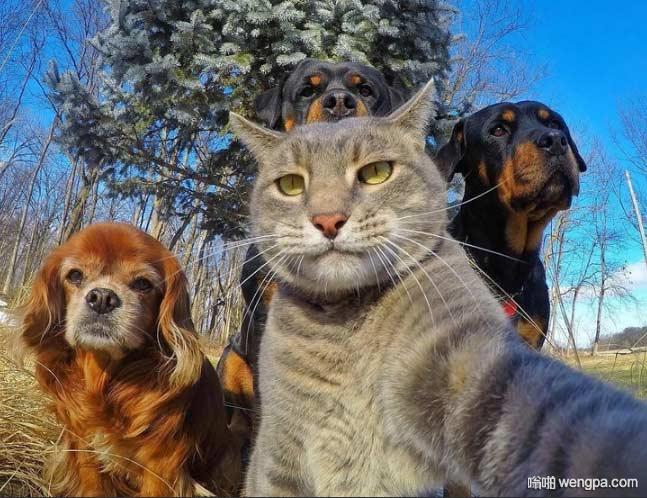 猫咪和小伙伴们自拍 背后的蓝天不错
