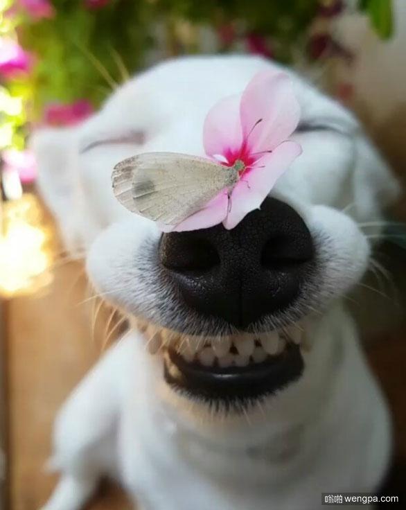 狗狗乐开了花 引来了蝴蝶