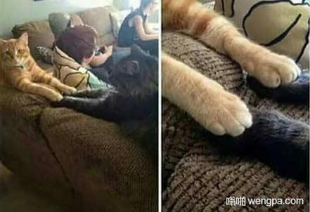 家里的喵咪偷偷的牵手 猫咪搞笑图片