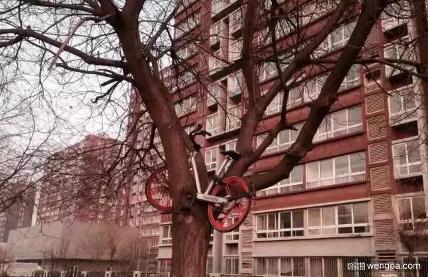 共享单车的奇葩损车事件 北京通州次渠大街上一辆摩拜单车被人放到树上