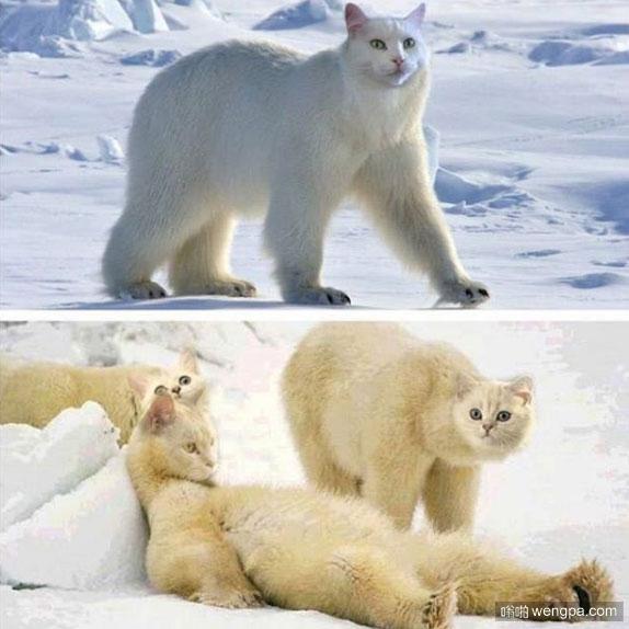 北极熊换上猫脸 毫无违和感 - 嗡啪网