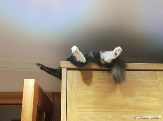 这货四仰八叉在衣柜顶上睡着了 猫咪睡觉搞笑图片 - 嗡啪网
