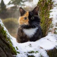 一只叫Elizabeth的可爱猫咪 有两副面孔呢~~~萌翻了!(6)