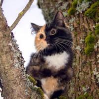 一只叫Elizabeth的可爱猫咪 有两副面孔呢~~~萌翻了!(4)