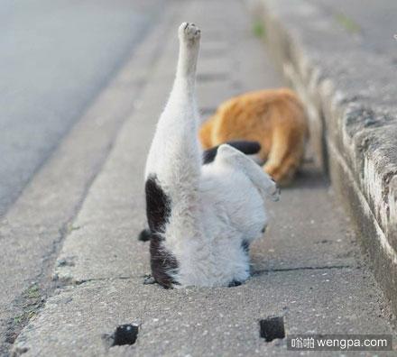猫咪钻下水道时屁屁漏出的那些瞬间