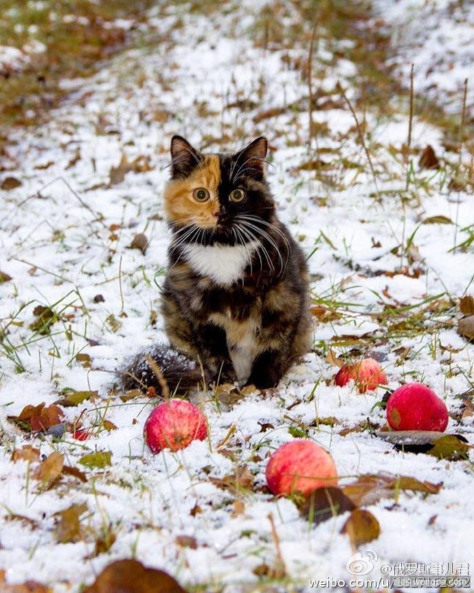 一只叫Elizabeth的可爱猫咪 有两副面孔呢~~~萌翻了!