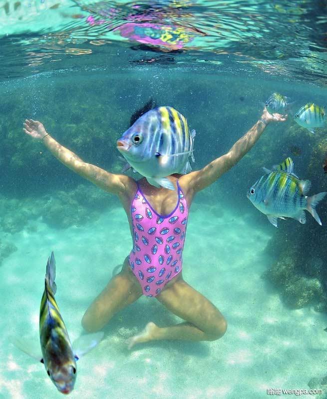 美丽的珊瑚礁 这完美的水下巧遇不会每天都发生